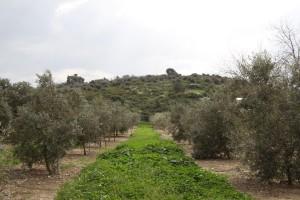 Kibbutz