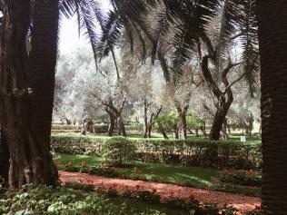 The Baha'i Garden in Haifa